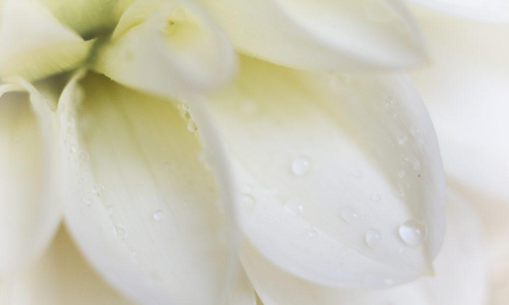 gewinnspiel-michael-buble-parfum-damenduft-by-invitation-9